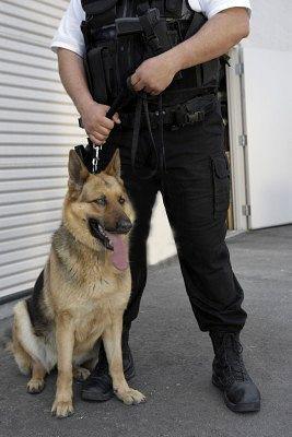 Özel Güvenlik Hizmetlerinde Görev Hayvanı Kullanımı hakkında genelge